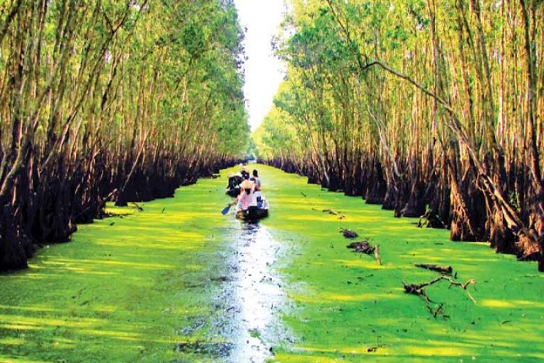 Vẻ đẹp của rừng tràm Trà Sư